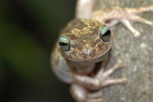 Frog, Venezuela, Nature, Animals, Gerardo, Animal