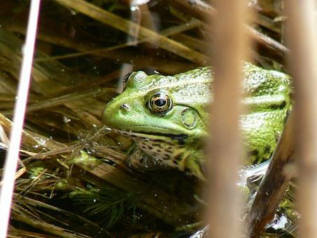 The Frog, Water, Lutry, Lake