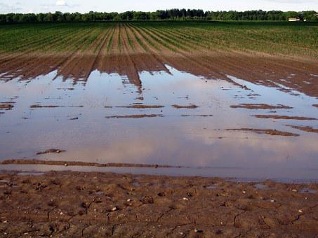 Arable, Field, Flood, Wet, Ground, Agriculture