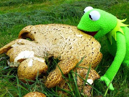 Mushroom, Parasol, Large, Brown, Eating Kermit, Frog