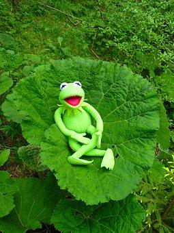 Butterbur, Leaf, Large, Nature, Frog, Kermit, Rest