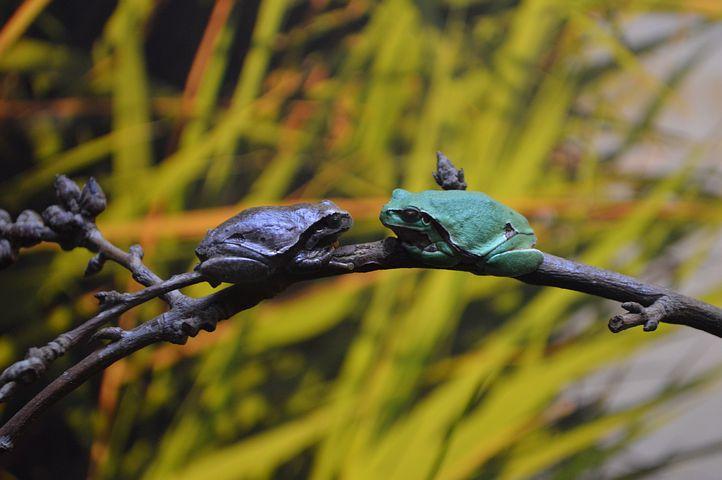Frogs Dating, Oceanarium, Europe, Nature, Plants