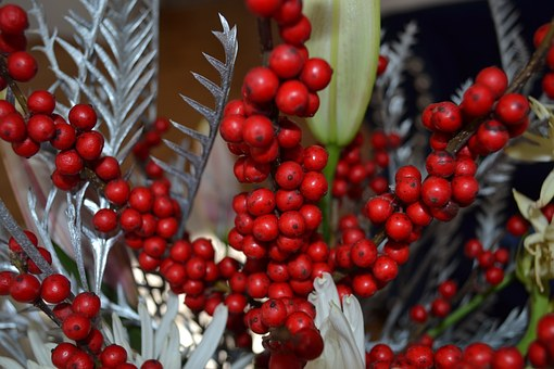 Christmas, Holly, Decoration, Xmas, Holiday, Festive