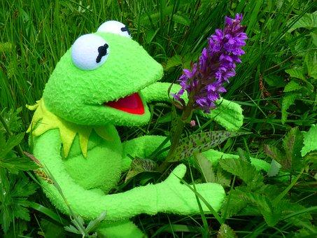 Orchid, Getuepfeltes, Frog, Kermit, Green