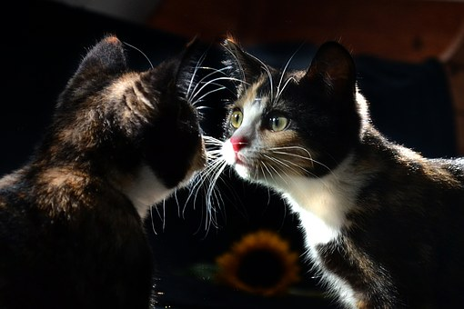 Mirror, Cat, Animal, Kitty, Reflection, Kitten, Young