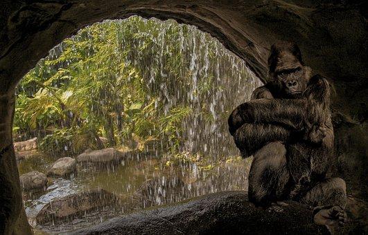 Monkey, Gorilla, Cave, Water, Waterfall, Think