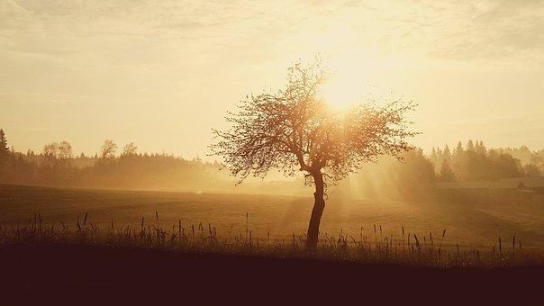 Sunrise, Sun, Skies, Nature, Morning, Landscape