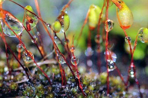Moss, Forest, Green, Nature, Wet, Abstract, Aqua