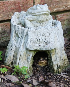 Toad, Green, Toad House, Garden, Frog, Amphibian