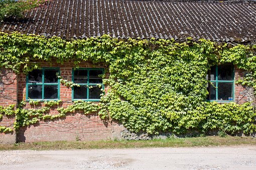 Ivy, Window, Windows, Old, Brick, Building, Shed, Hut