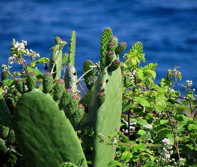 Plant, Sea, Cactus, Green, Flower, Shrub, Nature, Costa