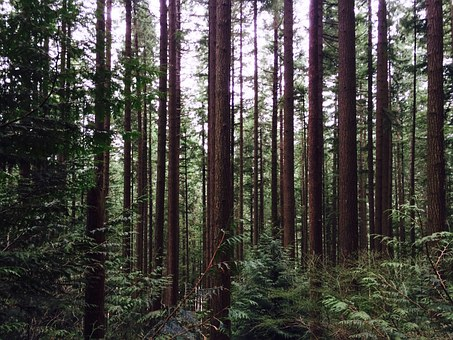 Trees, Forest, Woods, Nature, Green, Environment, Wood