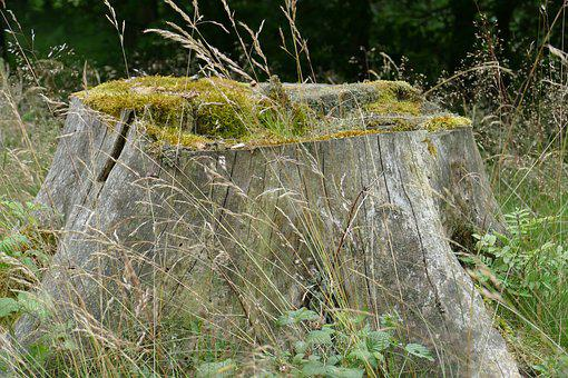 Tree Stump, Nature, Forest, Bemosst, Grasses, Moss