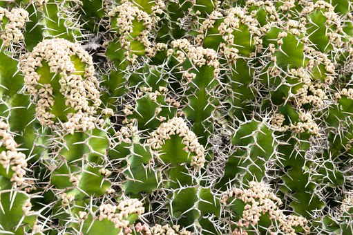 Cactus, Plant, Pattern, Nature, Green, Flower, Natural