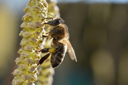 Bee, Yellow, Close, Macro, Apiformes, Anthophila
