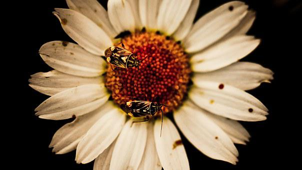 Flower, Bugs, Insects, Nature, Plant, Garden, Macro