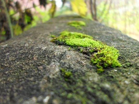 Grass, Wall, Cement, Plant, Natural, Botanical, Organic