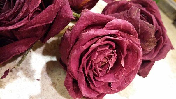Rose, Leaf, Nature, Feelings, Floral, Plant, Dead