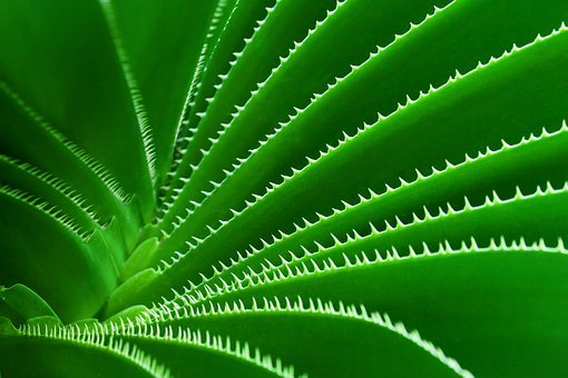 Green, Nature, Botany, Cactus, Plant, Pattern, Sharp