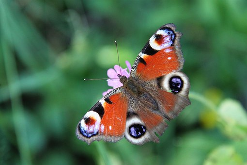 Nature, Unfortunately, Flight, Foreground, Fauna