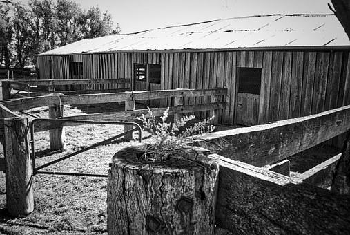 Shed, Rustic, Vintage, Wooden, Stables, Weathered, Farm