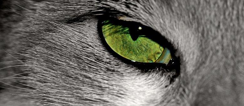 Cat, Animal, Cat's Eye, Eye, Pet, Animal Portrait, Iris