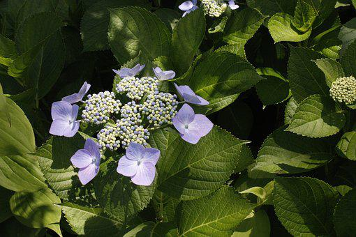 Flower, Violet, Green, Park, Extraordinary, Japan, Hues