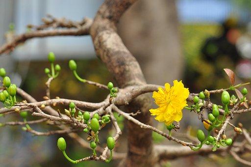 Grass, Floral, Flower, Herbal, Botanical, Plant