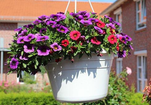 Flowerpot, Flower, Spring, Garden, Green, Plant