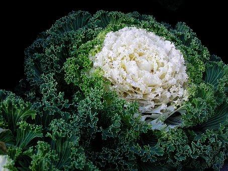 Food, Cabbage, Vegetable, Green, Organic, Leaf
