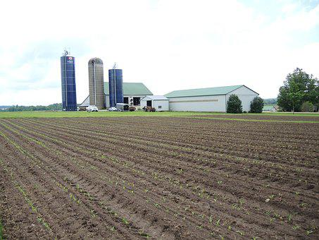 Cultivate, Field, Farm, Plant, Furrow, Farmland