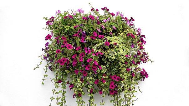 Hanging Basket, Flowers, Hanging, Basket, Green, Spring