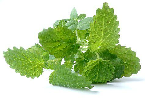 Plant, Leaf, Leaves, Green, Green Leaf, Nature