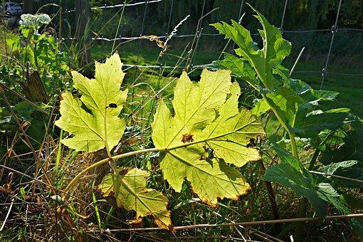 Leaf, Plant, Vein, Vegetation, Roadside
