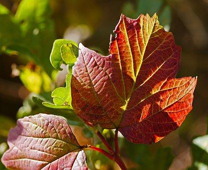 Autumn, Leaves, Coloring, Veins, Leaf Veins