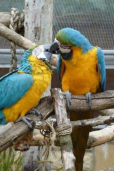 Kissing, Birds, Parrots, Kiss, Love