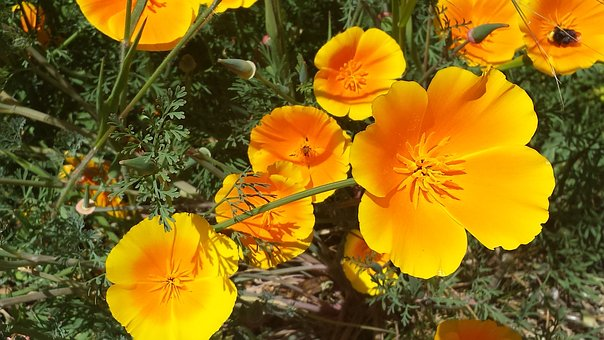 Yellow, Orange, Flower, Petal, Nature, Bright, Color