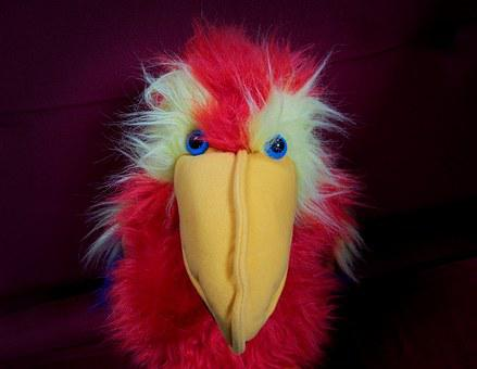 Stare, Parrot, Puppet, Toy, Bird, Fluffy, Furry, Fur