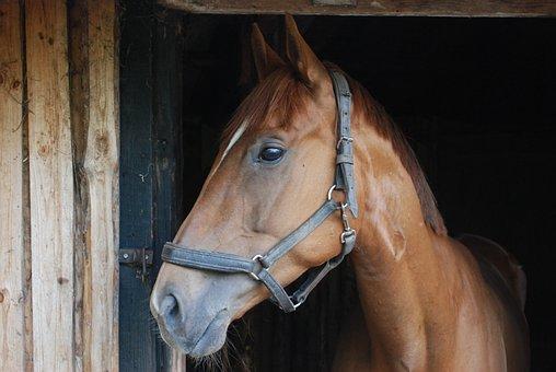 The Horse, Horses, Animal, Horse, Catwalk, Pony