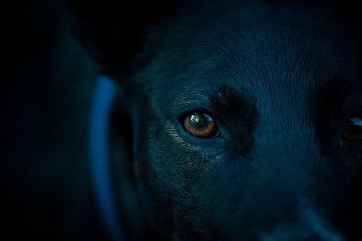 Dog Head, Eye, Pupil, Dog Look, View, Look, Head