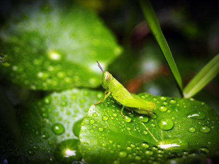 Leaf, Water, Green, Drop, Background, Natural, Nature