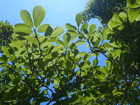 Sky, Cloud, Wind, Natural, Wood, Woods, Branch, Vein