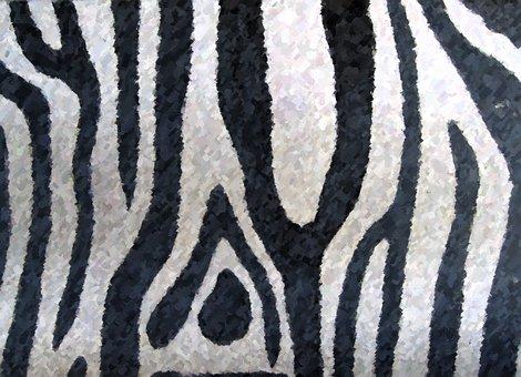 Zebra, Zoo, Coat, White, Bla, Black White