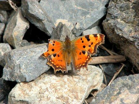 Butterfly, Vanessa Ceik