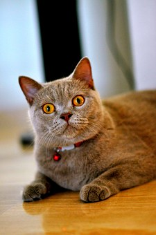 Cat, Funny, Pet, Domestic, Feline, Fur, Fluffy