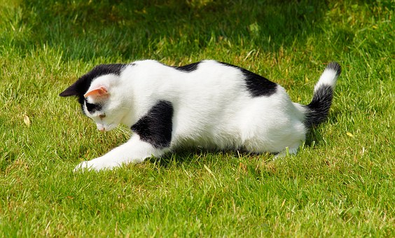 Cat, Domestic Cat, Young, Playful, Garden, Out