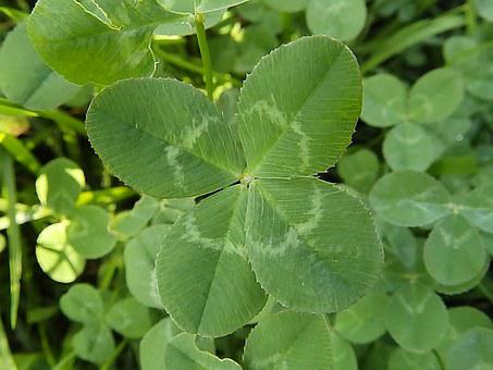 4 Leaves, Clover, Leaf