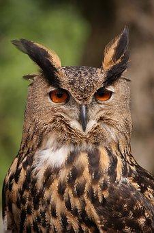 Owl, Bird, Animal, Tawny Owl, Nocturnal, Falconry
