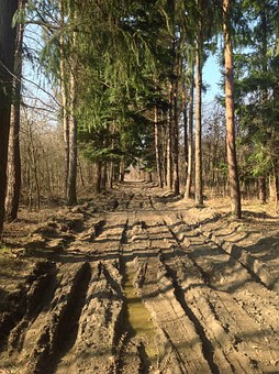 Muddy Road, Dirt Road, Dusty Road, Forest, Spring, Rest