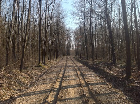 Spring, Road, Dusty Road, Muddy Road, Dirt Road, Forest